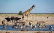Life on the brink of a sixth mass extinction