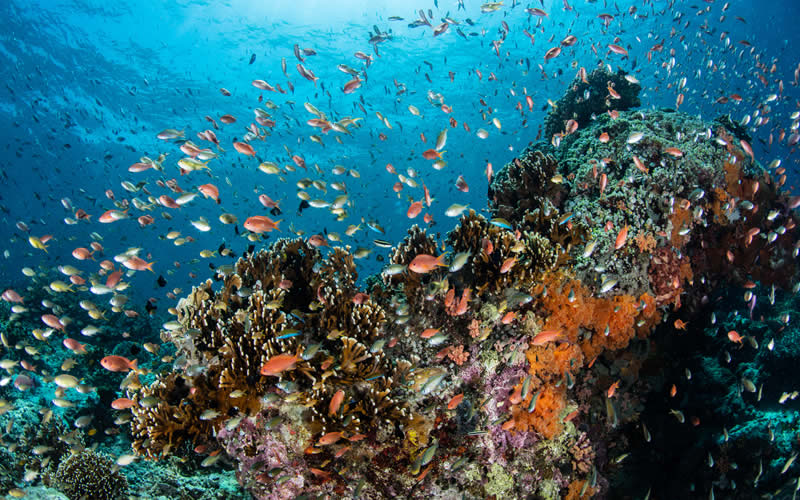 Prevent Further Damage to the Great Barrier Reef