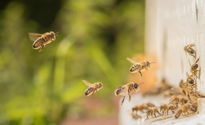 What does loss of bees mean for us