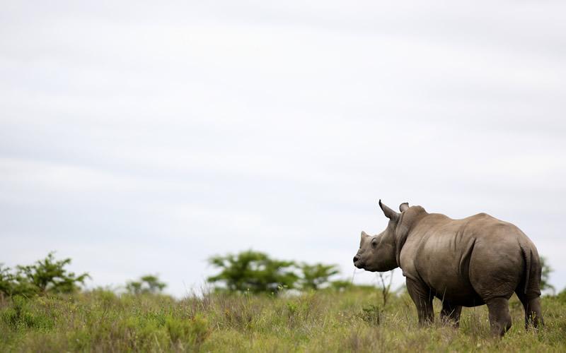 Zero Rhino Poaching