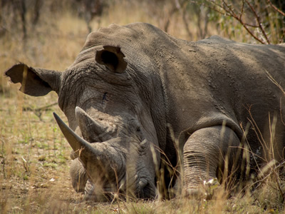 five impacts of poaching on the environment and country