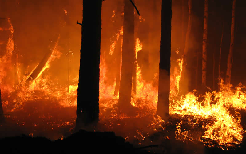 Actions to Stop Wildfires Becoming More Devastating