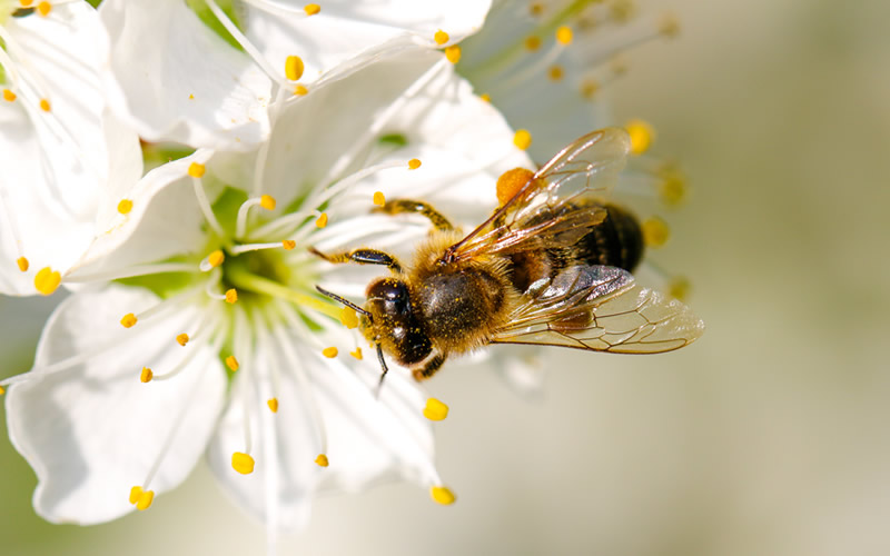Environmental Benefits of Pollination