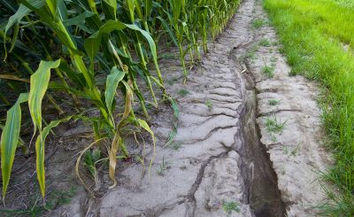 Damaging consequences of agricultural runoff