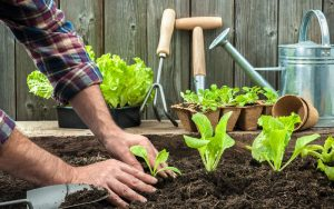 Gardening For Physical and Mental Health