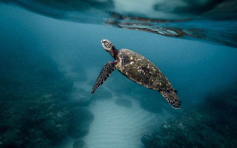 How does a sea turtle protect itself