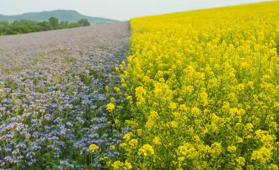 reasons why agricultural biodiversity matters