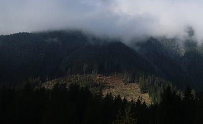 illegal deforestation in Romania