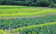 The ways in which farming can win over climate change
