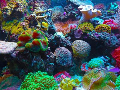 Healthy coral reef habitat