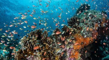Indicators of ocean health