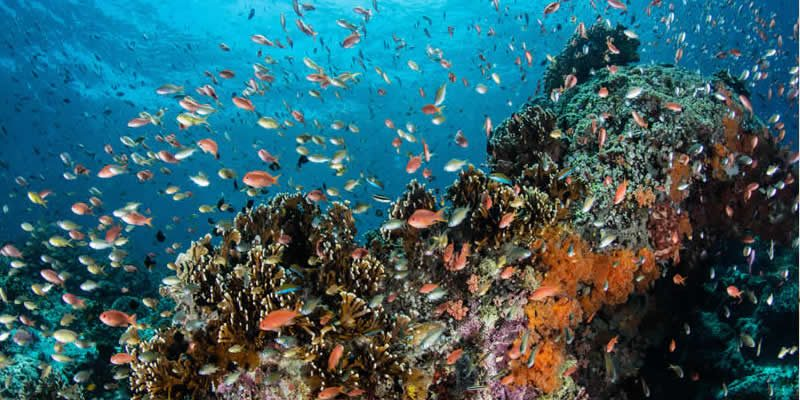 Indicators of ocean health