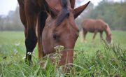ways horses help the environment
