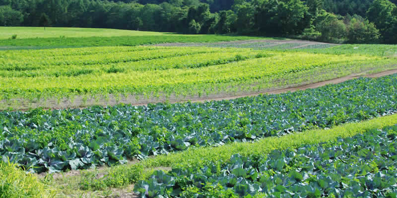 Benefits of crop rotation
