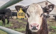 eating less meat to reduce emissions