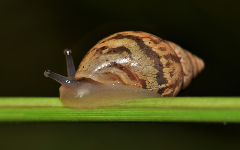 Saving India's Land Snails