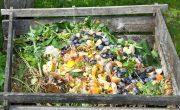 Strategies to Tackle Food Wasting