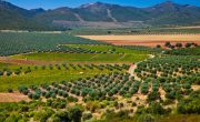 What-is-over-cultivation
