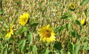 Biointensive Farming