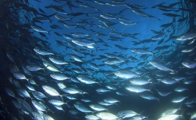 Steps to help fish stocks recover