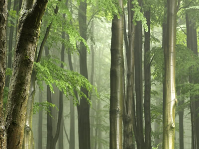 Forests help renew clean air.