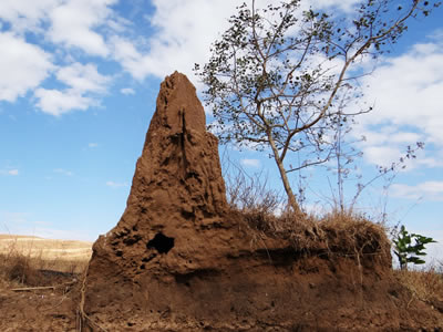 Termite mound in savanna