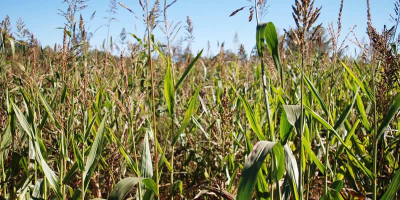Malawian Farmers Fight Climate Change