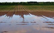 Repairing Damaged Soil