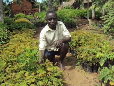 Sikenala tending seedlings in his tree nursery