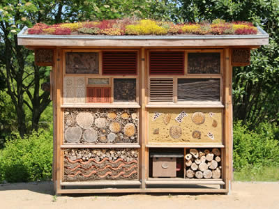 Large insect house