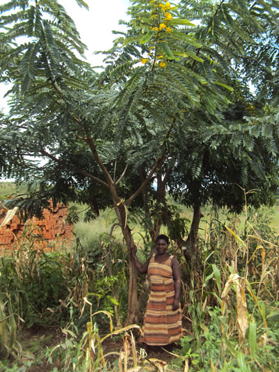 Nanthambwe standing under a yellow acacia tree she planted at her house