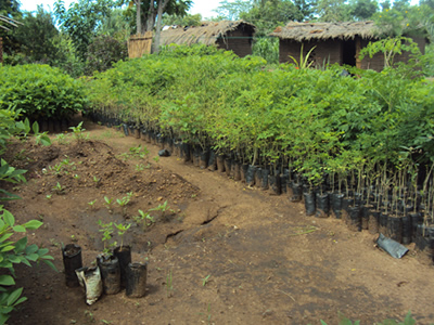 a variety of tree seedlings ready for planting