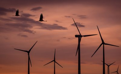 Preventing birds from wind turbines