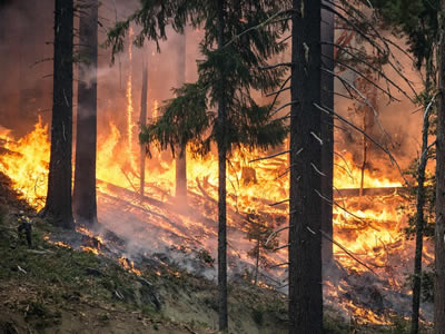 Forest destruction by wildfire
