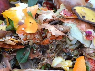 High-moisture organic waste
