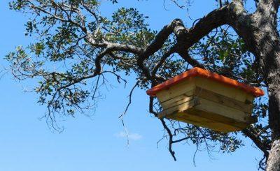 New hive - Nature's Nectar Zambia