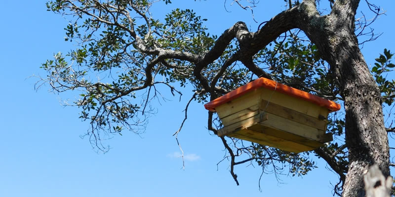 New hive - Nature's Nectar Zambia