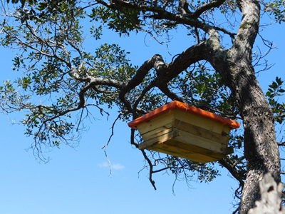 A sustainably produced beehive