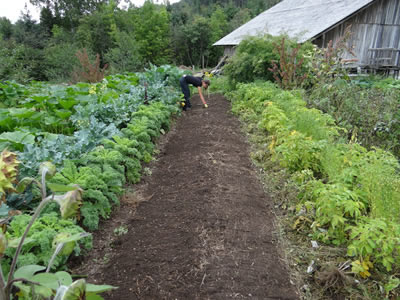 Sustainably grown vegetable garden