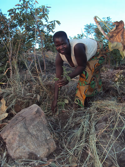 Nandolo tending a newly planted indigenous tree.
