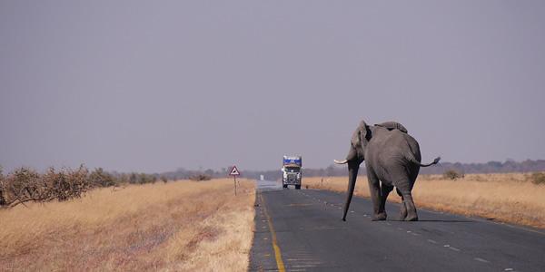 Elephants suffer habitat loss