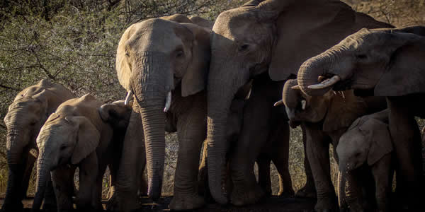 Elephant family together