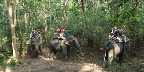 Elephant ride for tourists