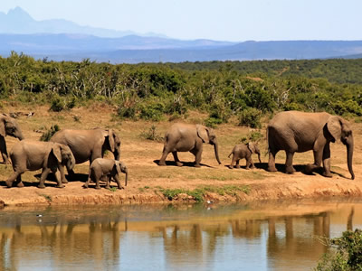 Elephants are a keystone species