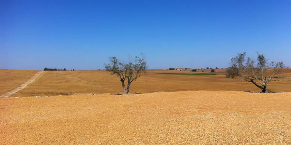 Desertification of cropland