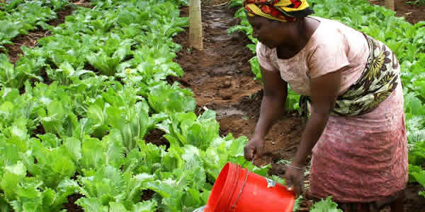 Sustainable farmer in climate change stricken Africa