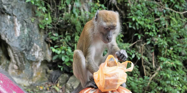 Monkey holding a plastic bag