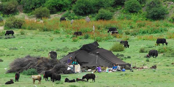 Nomadic herders in Tibet
