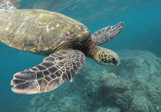 Observation of sea turtle behavior helps to protect them