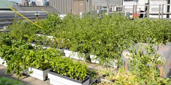 Urban roof gardening
